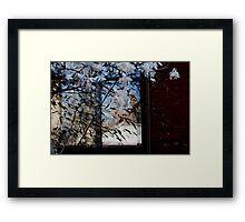 Blossoms learned Framed Print