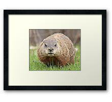 Spring has sprung, grass has riz - groundhog wondering where the girlies is Framed Print