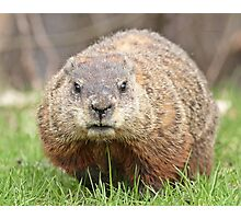 Spring has sprung, grass has riz - groundhog wondering where the girlies is Photographic Print