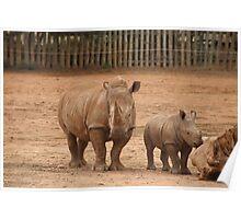 Baby Rhino & Mum Poster