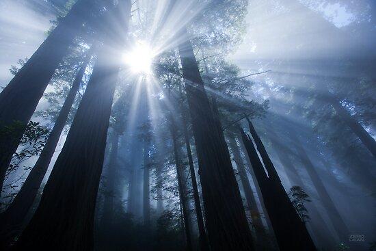 Enchanted Forest III by Zero Dean