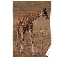 Giraffe Capers Poster