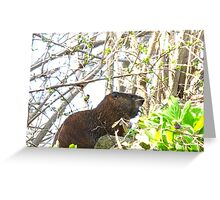 This a'int no Groundhog Day Greeting Card