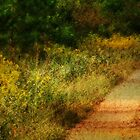 Country Backroads by Ginger  Barritt