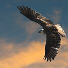 Full Wingspan by byronbackyard