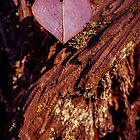 Tree Heart by Zero Dean