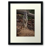 Stand Up & Be Counted Framed Print