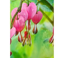 My Bleeding Heart Does Stain Photographic Print