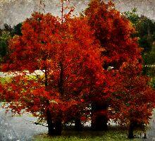 Mississippi Cypress by Ginger  Barritt