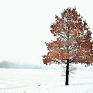 tree with leaves in the winter by anilevi