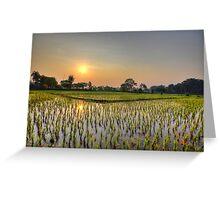 Ricefield Sunrise Chiang Rai Greeting Card