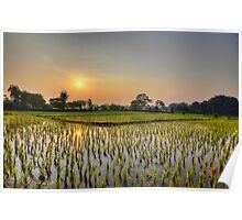 Ricefield Sunrise Chiang Rai Poster