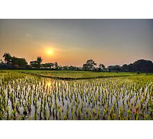 Ricefield Sunrise Chiang Rai Photographic Print