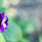 Hints Of Viola by Josie Eldred