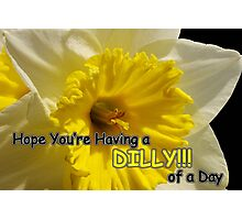 daffy dilly of a day Photographic Print