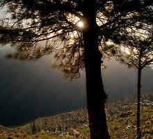 black tree sunrise by pushkar17