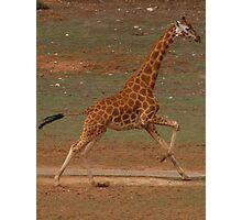 Run Giraffe Run Photographic Print