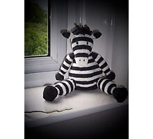 Knitted Zebra Photographic Print