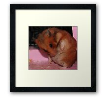 Cleaning time Framed Print