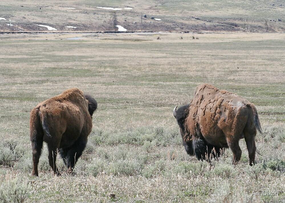 Where Buffalo Roam by AnnDixon