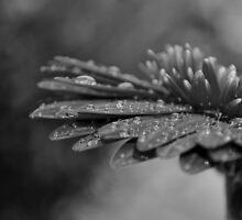Rainy Day by Tamara Al Bahri