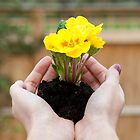 Hands holding yellow flowers.  by sallyrose1