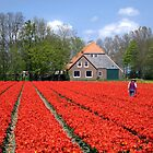 The Tulip Farmer by Jo Nijenhuis
