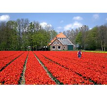 The Tulip Farmer Photographic Print