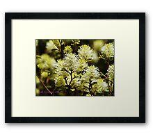 Spring at Brookside Gardens Framed Print