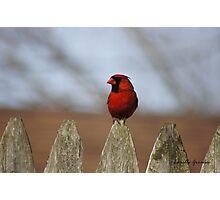 Glamorous Red Photographic Print