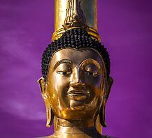 gold buddha by ratto