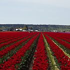 """RED for """"Joy"""" - Jump'n for Joy in the Tulip Patch! by seeingred13"""