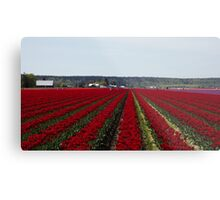 "RED for ""Joy"" - Jump'n for Joy in the Tulip Patch! Metal Print"