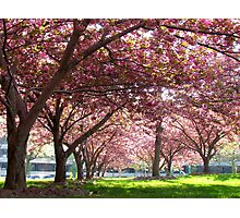 Spring time in New York City Photographic Print