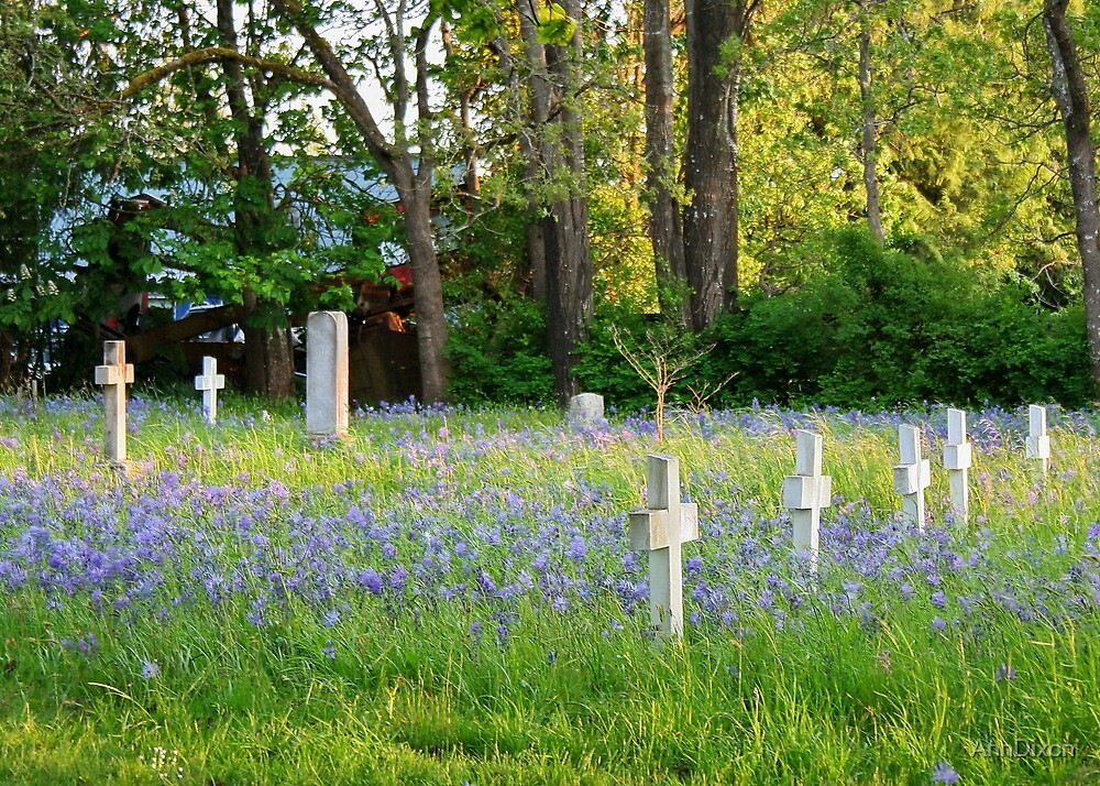 Vancouver Island Cemetery by AnnDixon