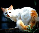 Mystic Spy Cat by tropicalsamuelv