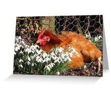 Sleepy hen among the snowdrops Greeting Card