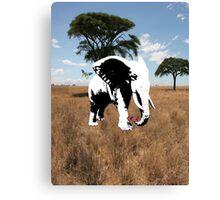 elephant on the safari  Canvas Print