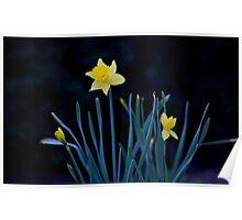 Lone Daffodil Poster