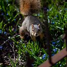 Squirrel by Michael  Kemp