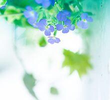 Spring begins... by Alina Uritskaya