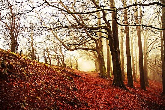 Autumn Wood. by Maybrick