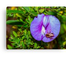 Bee on Blue Flower Digital Oil Canvas Print