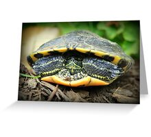 Shelled Turtle Greeting Card