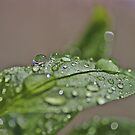 Water drops by liberthine01