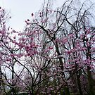 Blooms on bare trees by bubblehex08