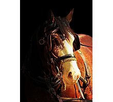 Age of Grace Photographic Print