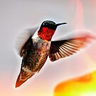 Ruby-throated Hummingbird by venny
