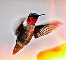 Ruby-throated Hummingbird by Savannah Gibbs