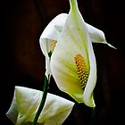 Flower Ballet by Lynnette Peizer